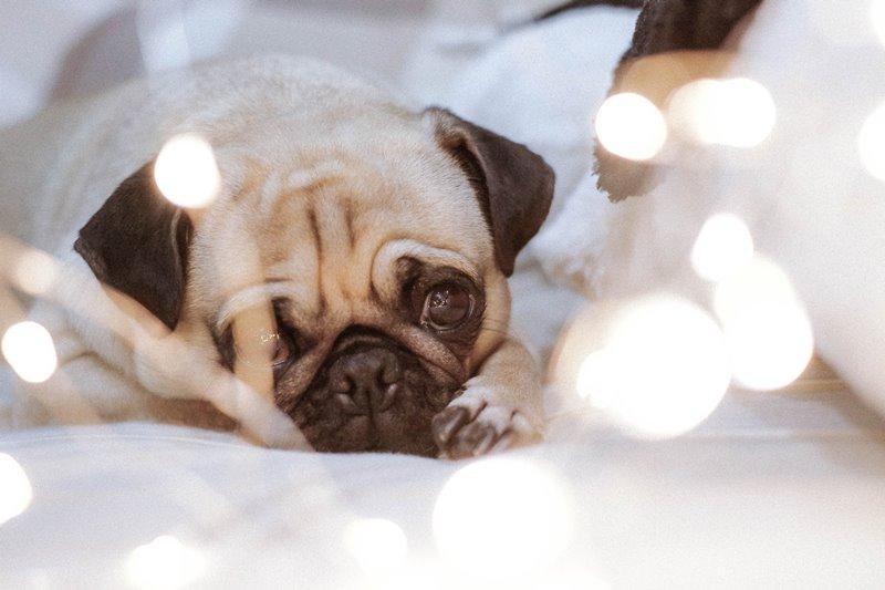 smutny pies nie ma wakatu